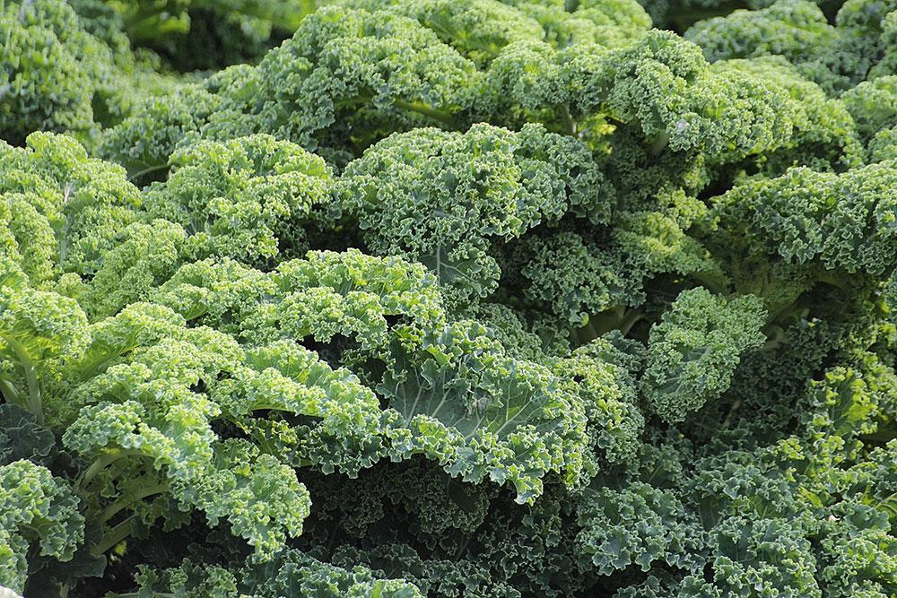 La nutrición, la mejor aliada contra la astenia primaveral