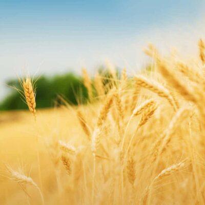 Estudiar Máster en Agricultura Ecológica