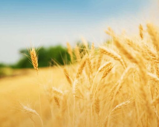 MASTER-EN-AGRICULTURA-ECOLOGICA