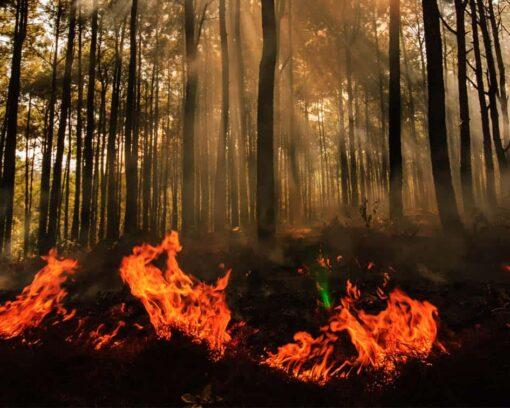 Estudiar Máster en Control y Extinción de Incendios