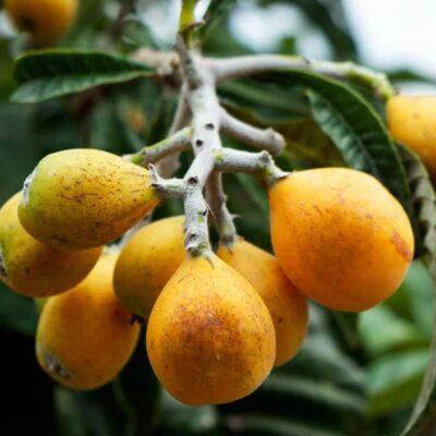 Estuudia ahora el máster en fruticultura