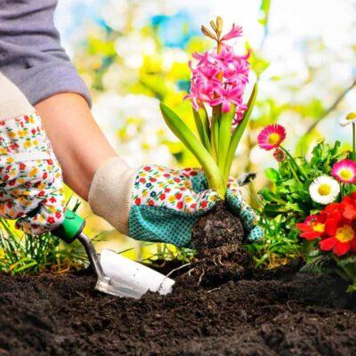 Fórmate con el máster en horticultura