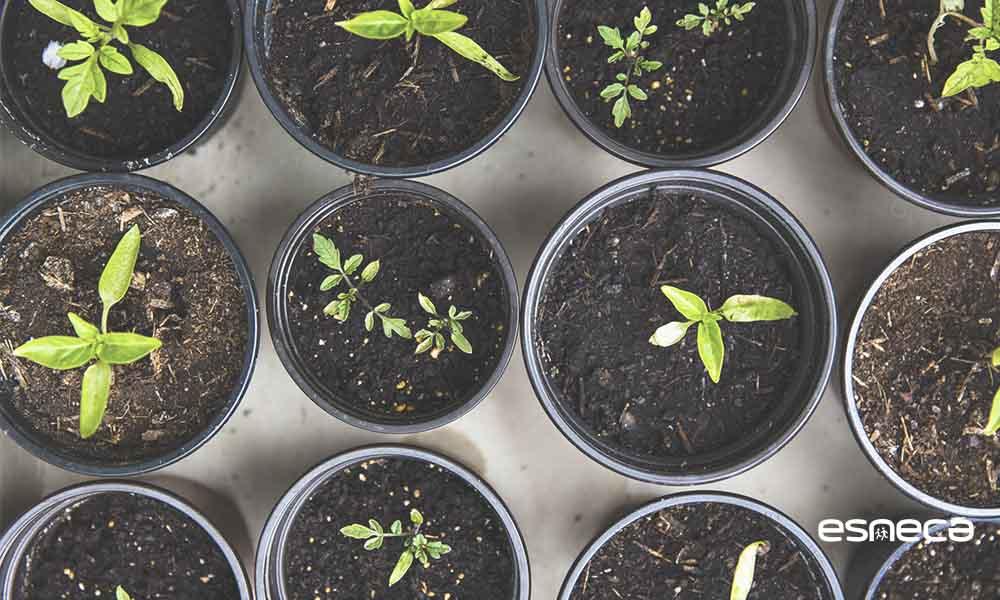 Cómo plantar semillas: guía completa para aprender a sembrar
