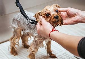 curso-higiene-canina