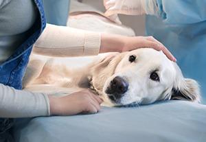 curso-hospitalizacion-veterinaria