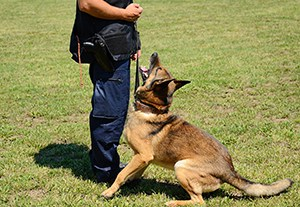 curso-leyes-proteccion-animal