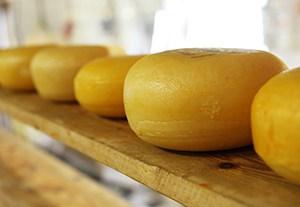 curso-maduracion-quesos