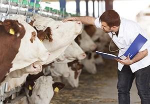 curso-otologia-veterinaria