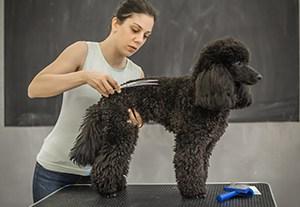 curso-peluqueria-canina-felina