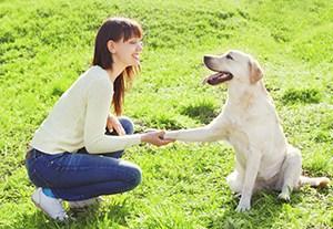 curso-seleccion-perros