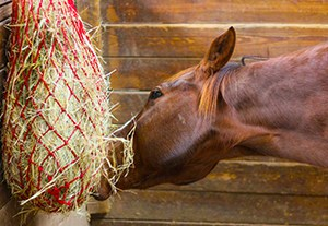 estudiar-alimentacion-caballos