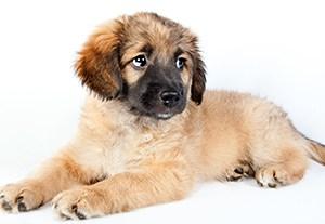 estudiar-asepsia-peluqueria-canina