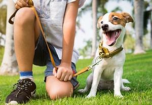 estudiar-comportamiento-perro