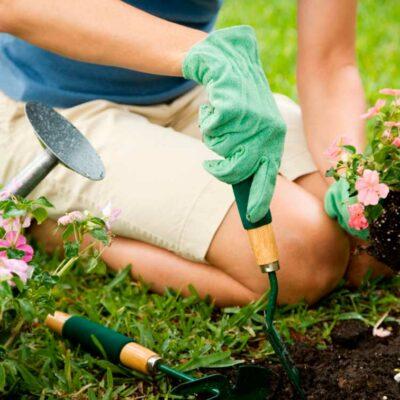 experto-jardineria-paisajismo