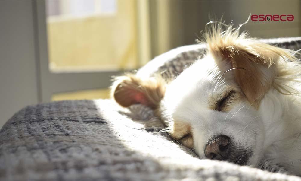 Leishmaniosis en perros: qué es, síntomas y prevención