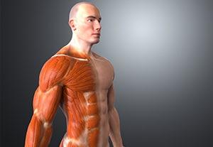 master-anatomia-humana