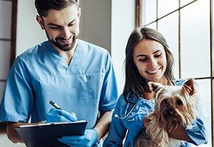 master-ayudante-veterinario