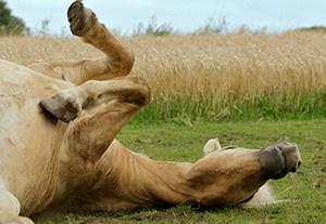 master-comportamiento-equino