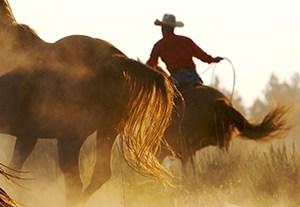 master-equitacion
