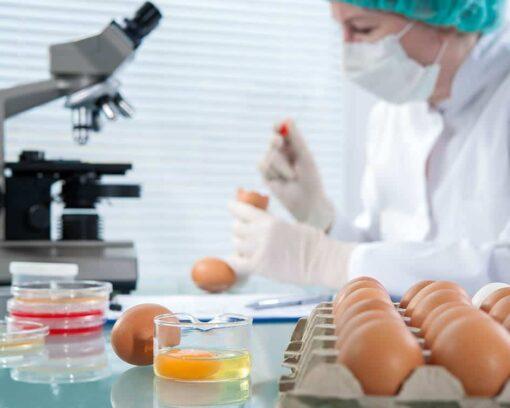 master-experto-en-calidad-alimentaria-diploma-autentificado-por-notario-europeo