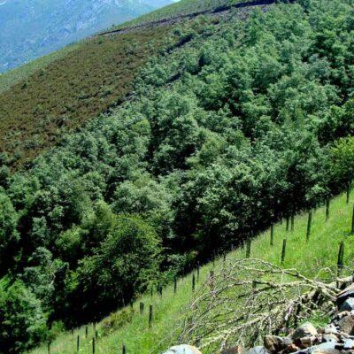 Estudiar Máster en Repoblaciones Forestales