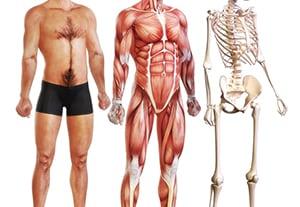 master-fisiologia-humana