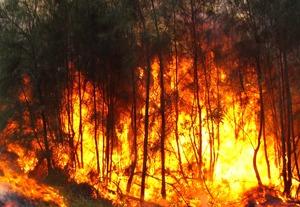 master-incendios-forestales