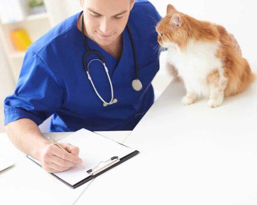 Estudia ahora el MBA en Administración y Dirección de Empresas Experto en Dirección y Gestión de Clínicas Veterinarias