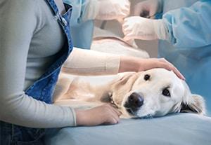 master-oncologia-veterinaria