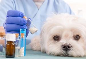 master-patologias-animales
