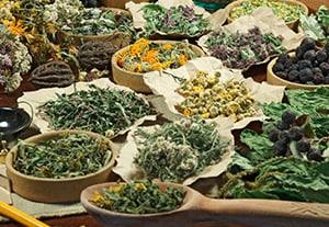 master-plantas-medicinales