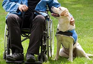 master-terapia-asistida-animales