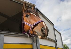 master-transporte-equino