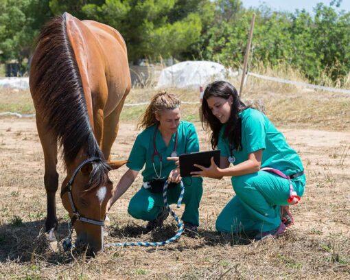 perito-judicial-en-veterinaria