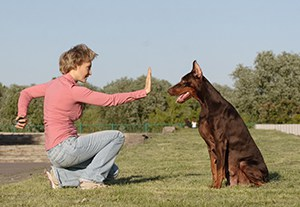 postgrado-adiestramiento-canino