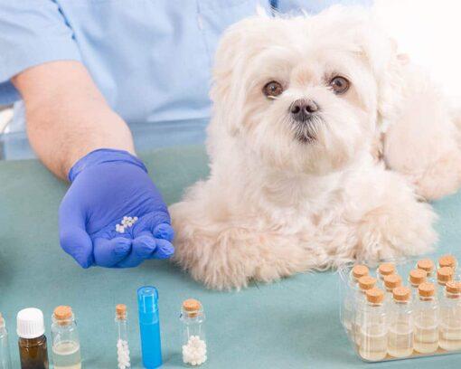 Estudia ahora el Postgrado en Homeopatía Veterinaria