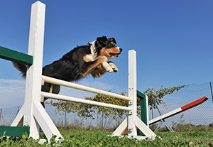 postgrado-perito-adiestramiento-canino