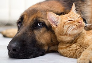 postgrado-razas-caninas-felinas