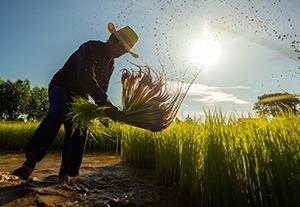 postgrado-regimen-agrario-seguridad-social