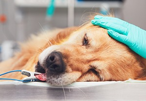 postgrado-traumatologia-animal