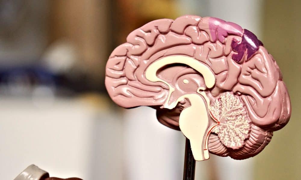 Qué es neuropsicología y cuáles son sus funciones