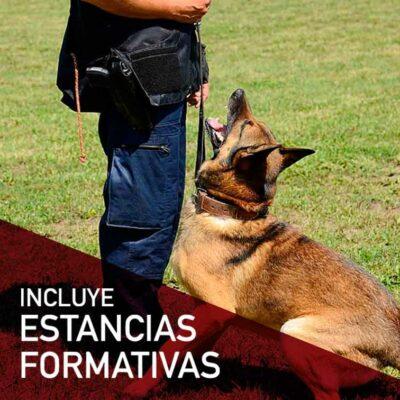 tecnico-adiestramiento-conducta-canina-practicas