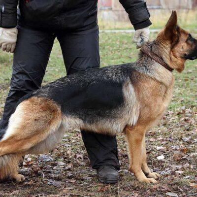 tecnico-experto-en-seguridad-con-unidad-canina-perito-judicial