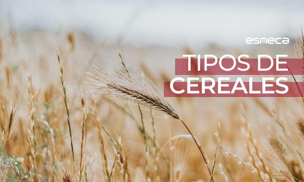 Estos son los tipos de cereales que debes conocer